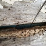 King House - Damage to Timber Walls - Water and Insects